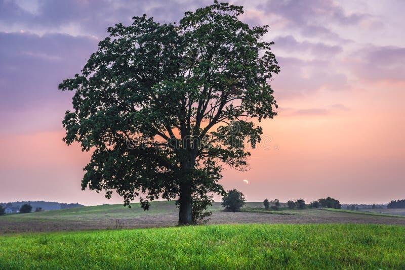 природа Польша стоковое фото