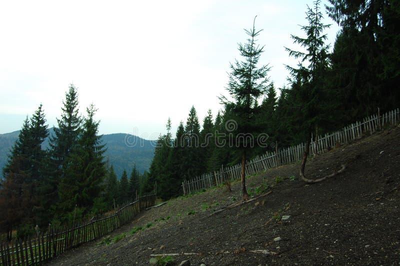 Природа прикарпатской горы стоковое фото rf