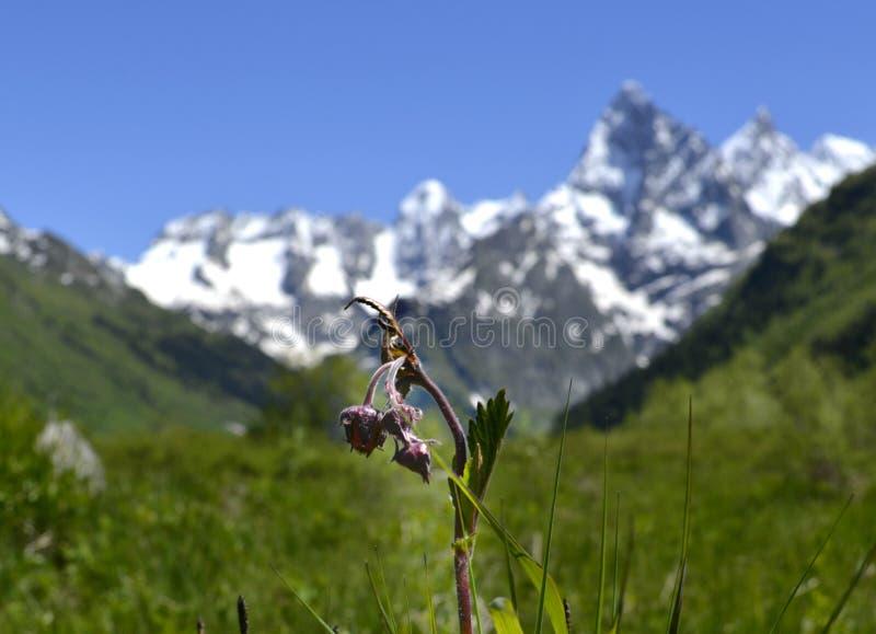 Природа северного Кавказа стоковая фотография
