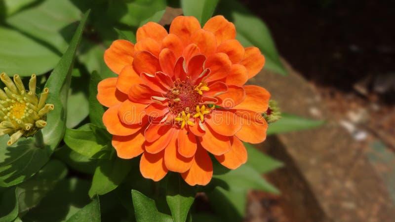 Природа цветка стоковое изображение rf