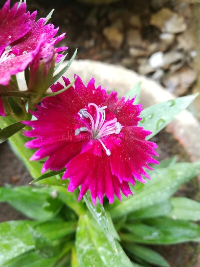 Природа цветка стоковое изображение
