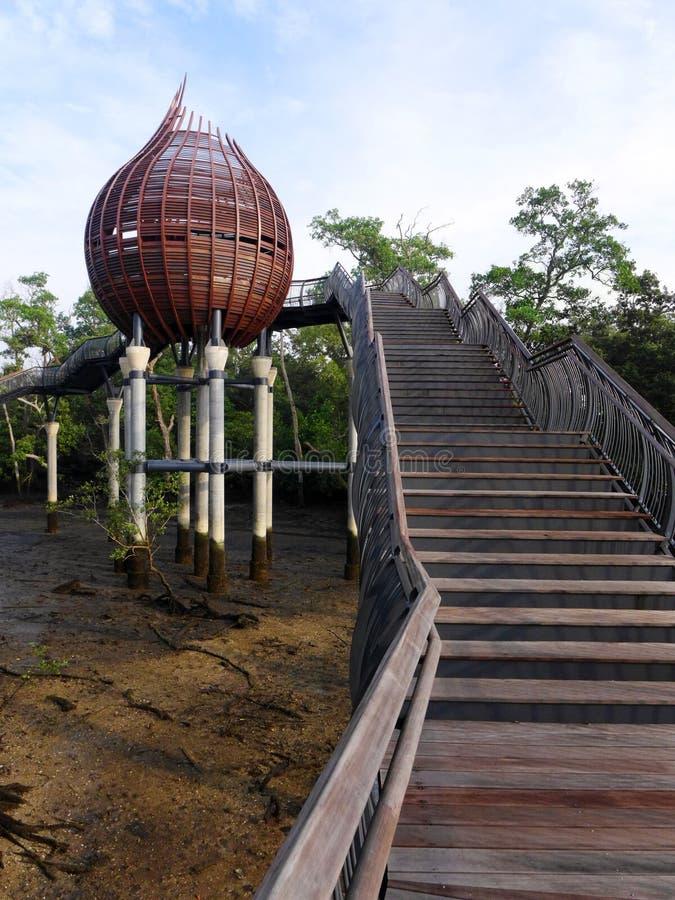 Природа, шаги водя к тайнику мангровы birdwatching стоковая фотография