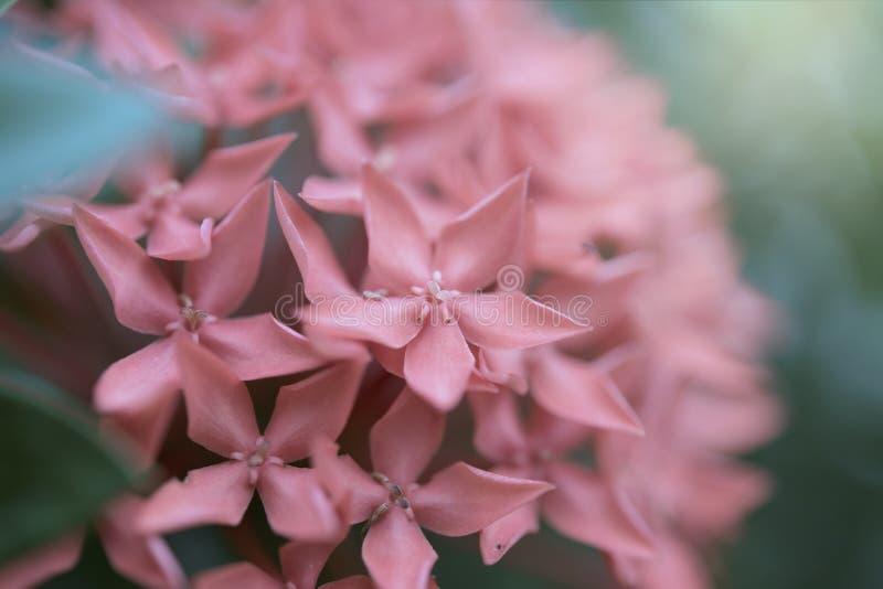 Природа шипа цветка красивой ветви красная стоковое изображение