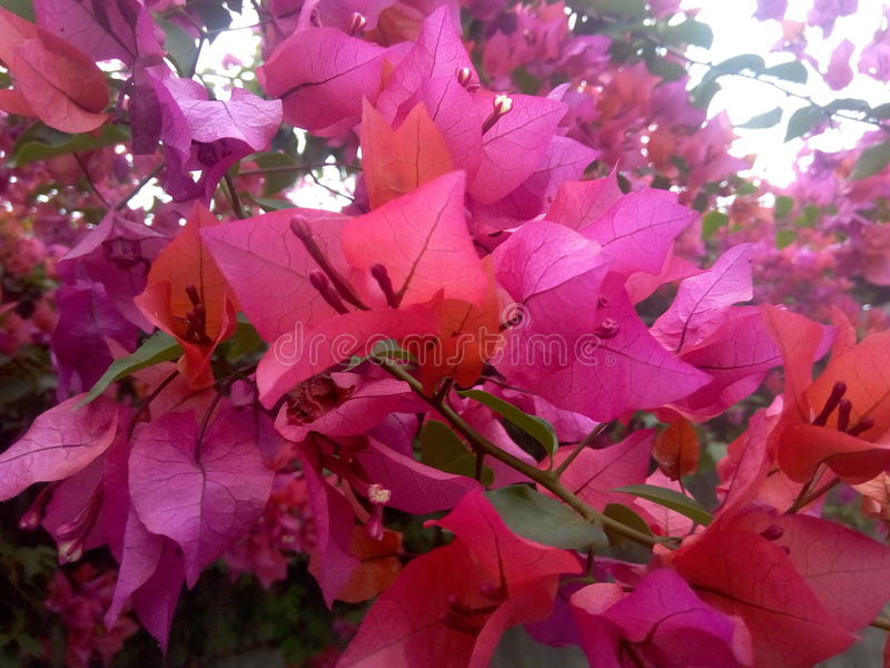 Download Природа стоковое изображение. изображение насчитывающей день - 81811345