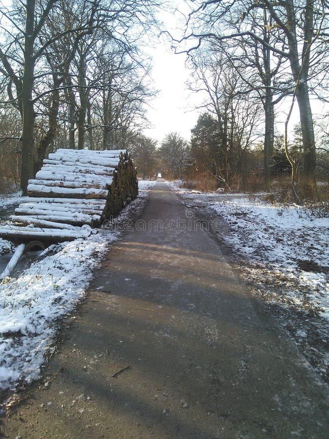 Природа firstsnow снега холодная свежая стоковые изображения