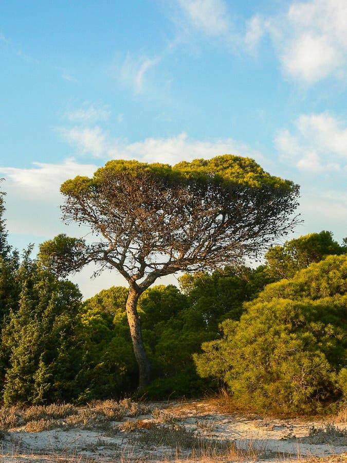 Природа habitat среднеземноморские maquis стоковое изображение
