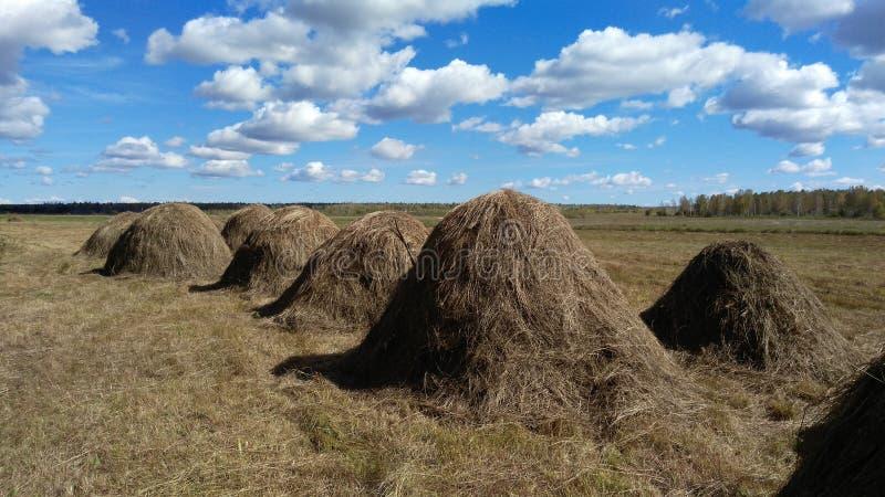 природа haystack поля состава стоковое фото rf