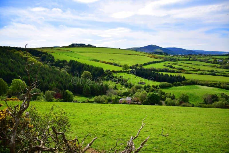 Природа Irland стоковое фото rf