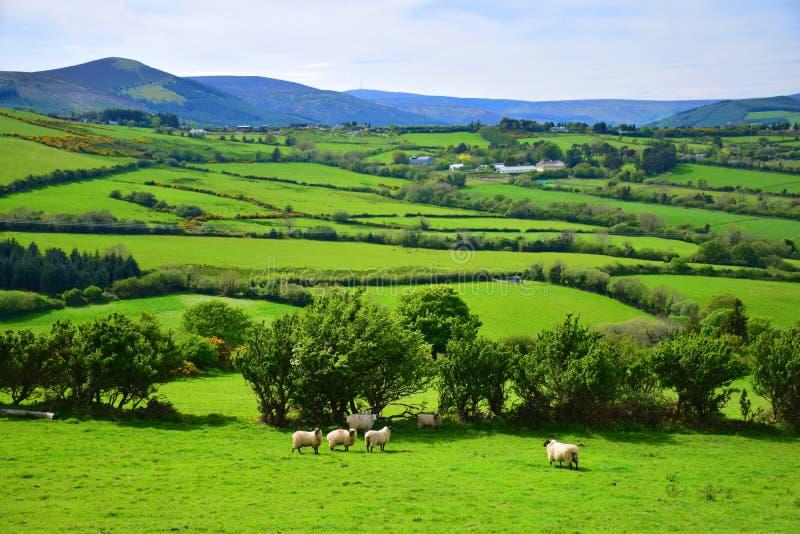 Природа Irland стоковые фото