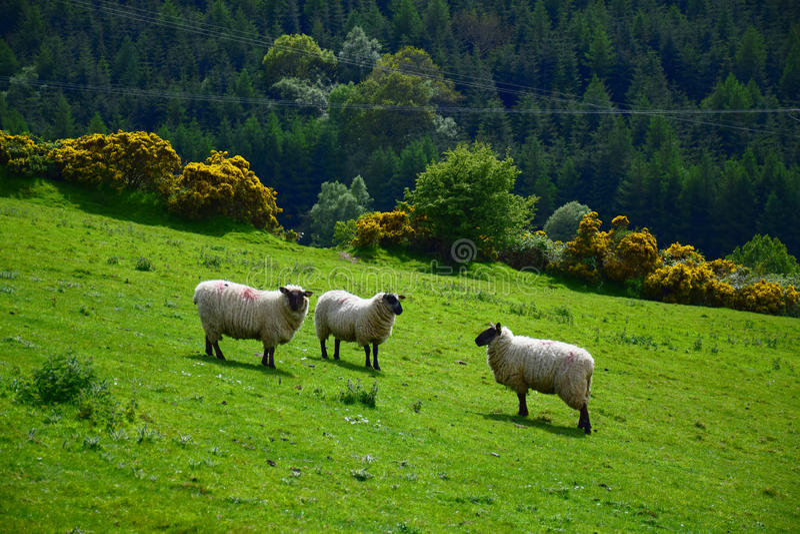 Природа Irland стоковые изображения rf