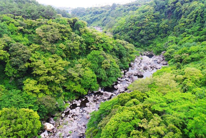 Природа Jejudo стоковые фотографии rf