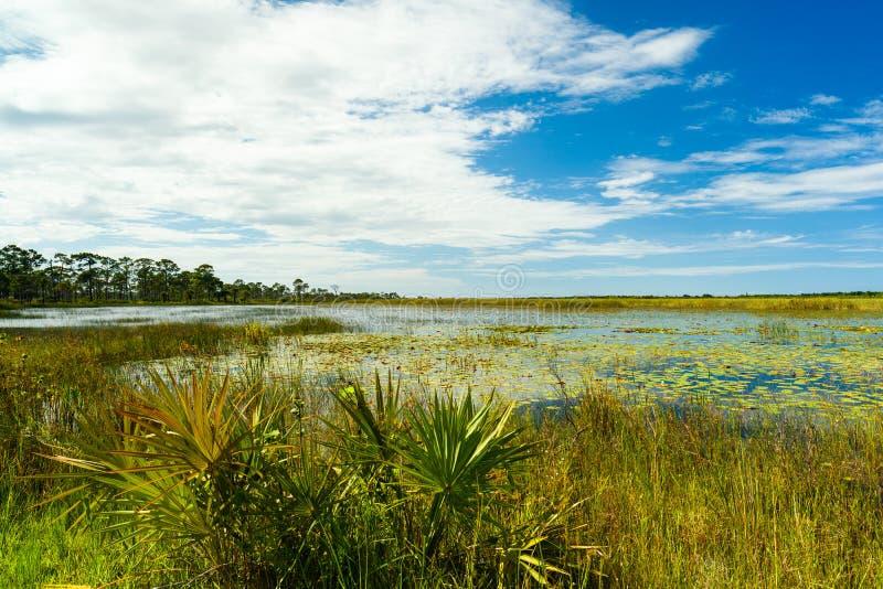Природный заповедник Флориды стоковое изображение rf