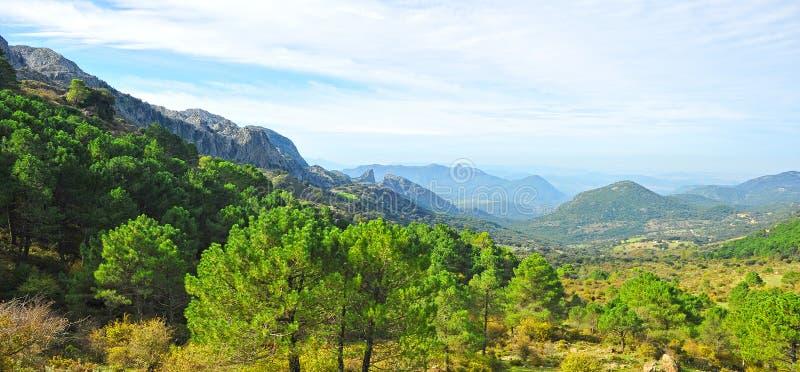 Природный парк Сьерры de Grazalema, провинция Кадиса, Испания стоковые фотографии rf