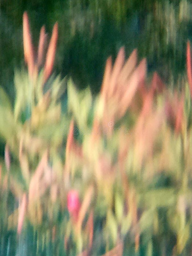 приставает белизну к берегу воды валов голубого кристаллического песка рая ладони Мальдивов острова праздников девушки роскошного стоковые изображения