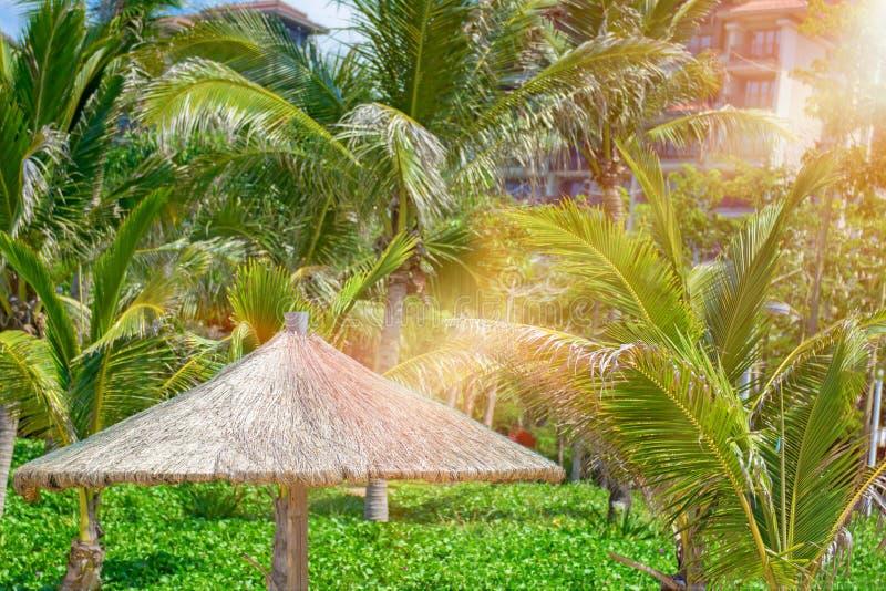Пристаньте красивые покрыванные соломой зонтики к берегу и яркое море бирюзы, большое воссоздание и релаксацию рай тропический стоковые изображения rf