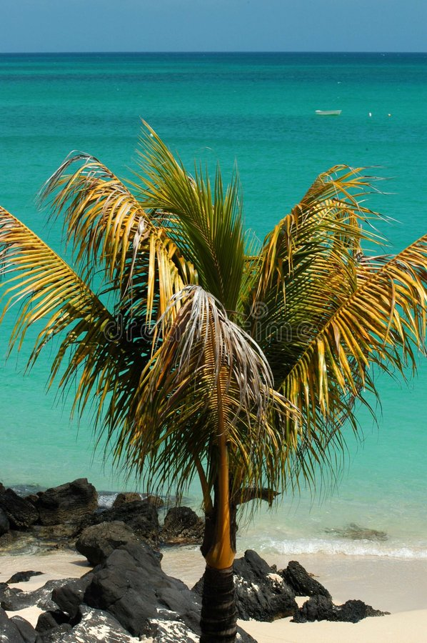 пристаньте пальму к берегу стоковое фото