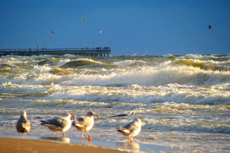 Пристань, птицы чайки и волнистое Балтийское море, Литва стоковая фотография rf