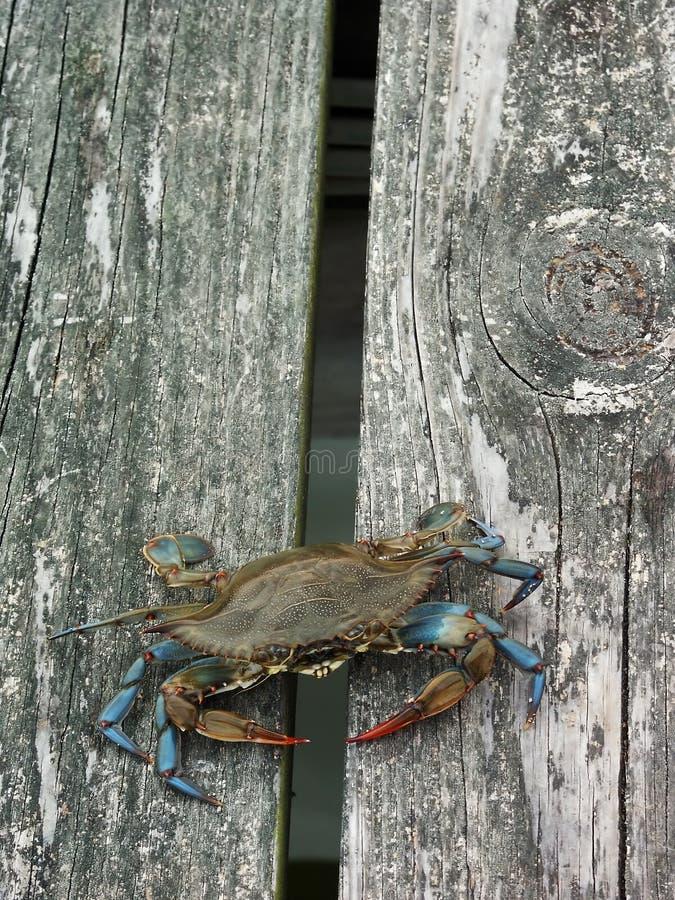 пристань crabbing стоковые изображения rf