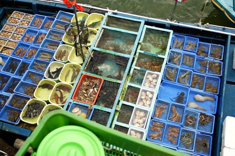 Пристань Sai Kung шлюпки морепродуктов, район Гонконг Sai Kung стоковое изображение rf