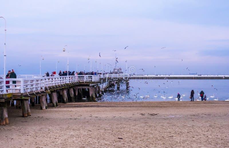 Пристань Sopot самая длинная деревянная пристань в Европе Люди идут и кормят лебеди на пляже в Sopot, Польше стоковые фото