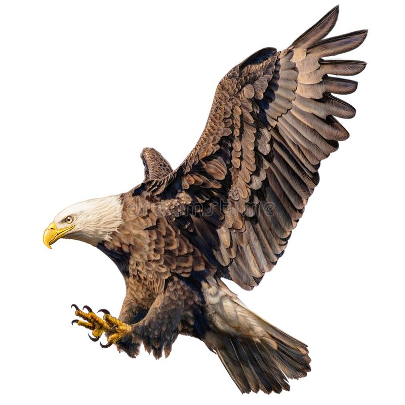 Притяжка руки нападения налёт летания белоголового орлана и цвет краски на белой предпосылке иллюстрация штока