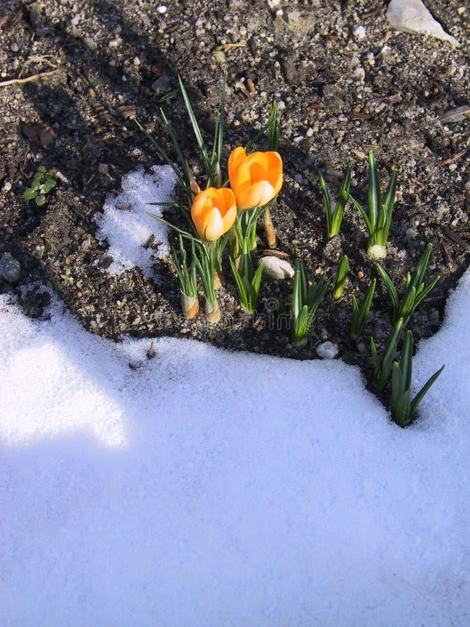 приходя весна s стоковые фото