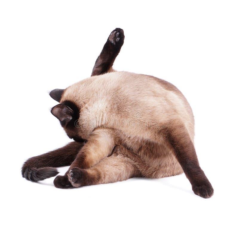 Прихорашиваться кота стоковая фотография