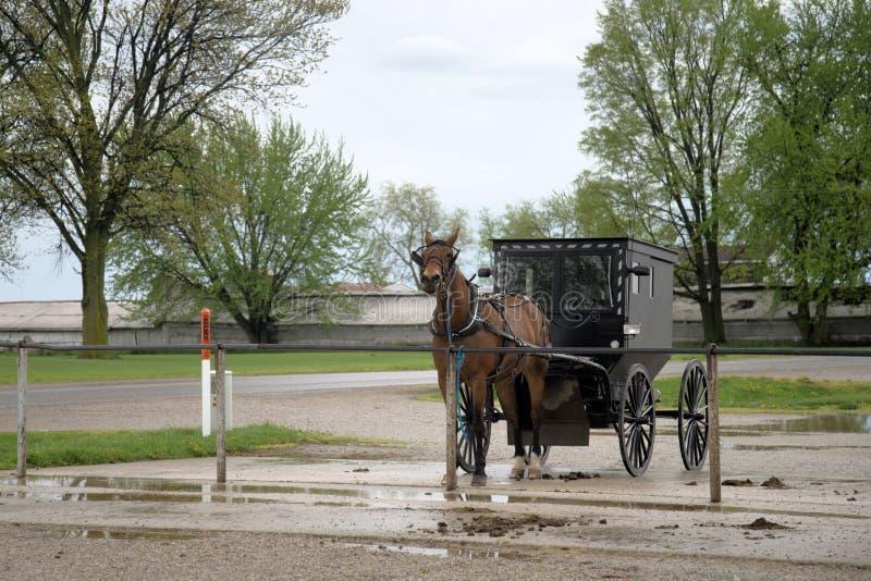 Прицепленные лошадь и багги Амишей, стоковая фотография rf