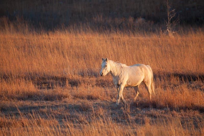 Причаливая лошадь в поле стоковые изображения