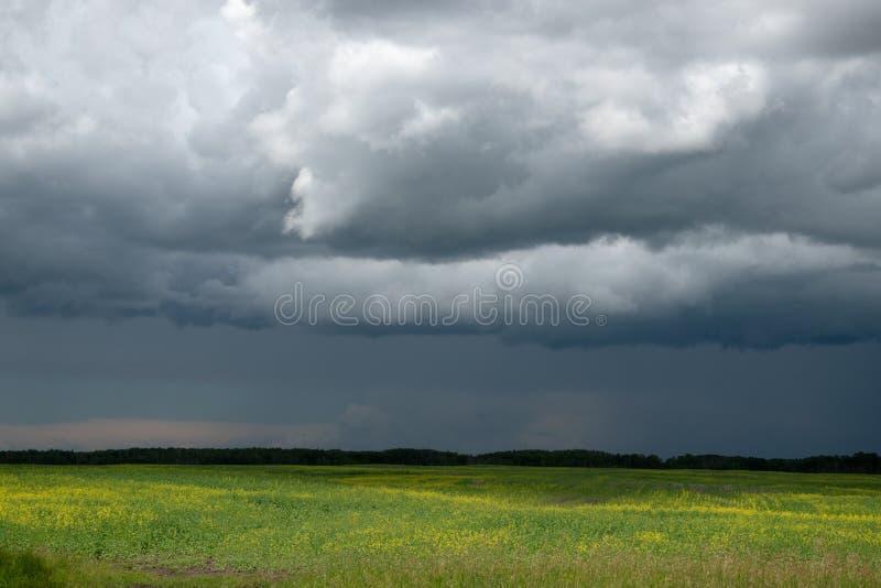 Причаливая облака шторма над канола полем, Саскачеваном, могут стоковое изображение