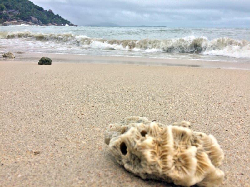 причаливая волны раковин моря стоковая фотография