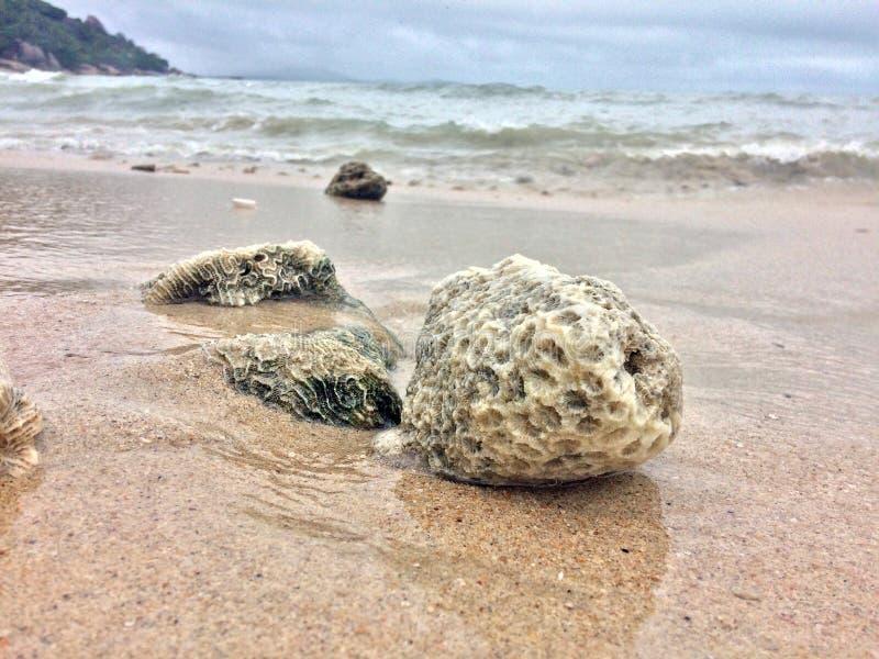 причаливая волны раковин моря стоковое изображение rf