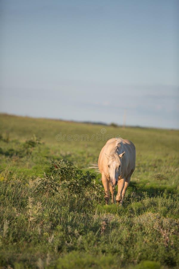 Причаливая лошадь стоковые фотографии rf