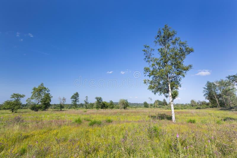 Причальте ландшафт в высоких фенах, Бельгию стоковая фотография rf