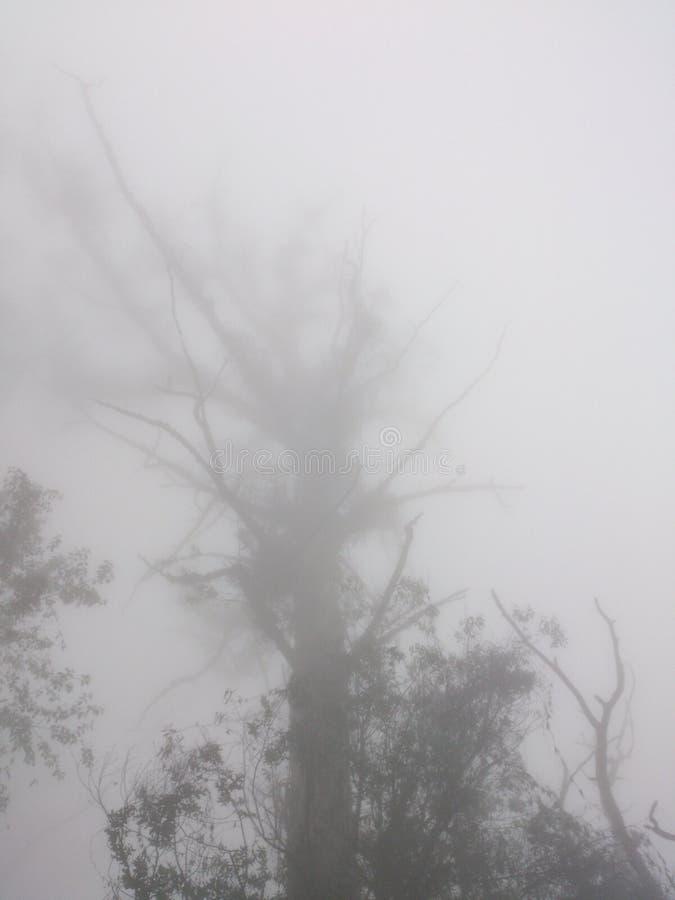 Причудливое дерево стоковые изображения