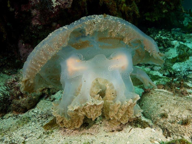 Причудливые медузы стоковые фото