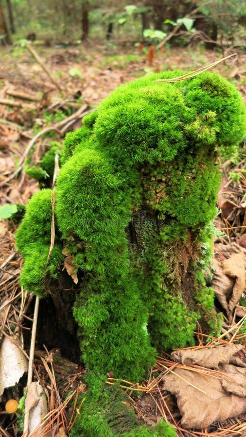 Причудливый пень дерева стоковые изображения rf
