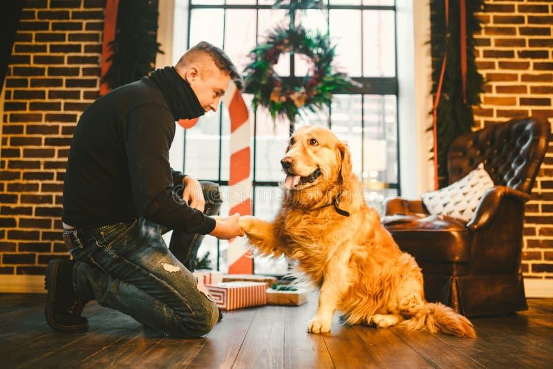 Приятельство человека и собаки Собака labrador породы золотого retriever любимца shaggy Человек тренирует, учит, что собака дает  стоковые фото