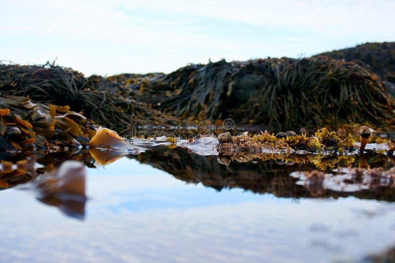 Приливные бассейны в национальном парке Acadia стоковые изображения