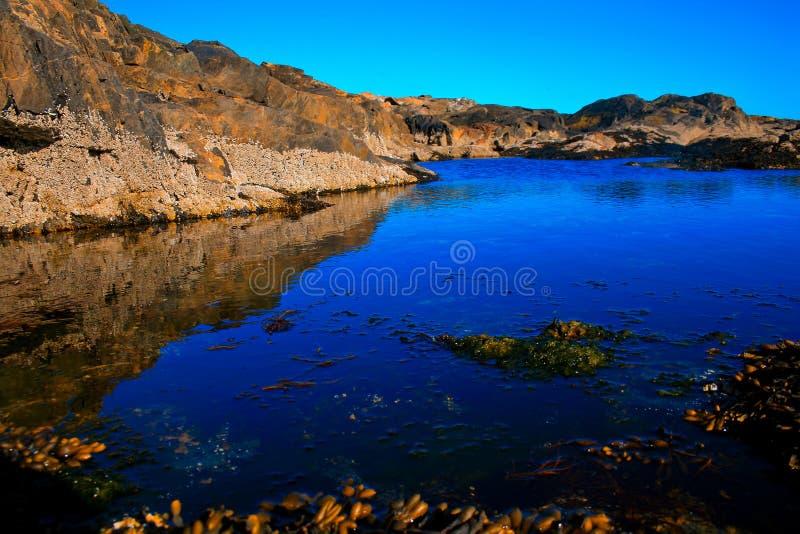 Приливные бассейны в национальном парке Acadia стоковое фото rf