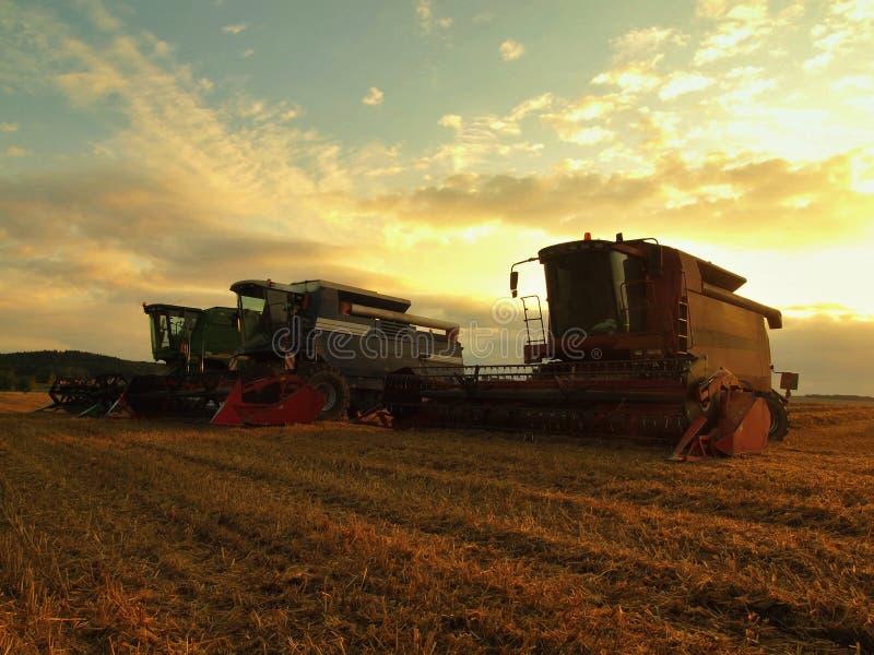При солнце вися низко на горизонте, пшеница сбора зернокомбайна в середине поля фермы стоковые изображения rf
