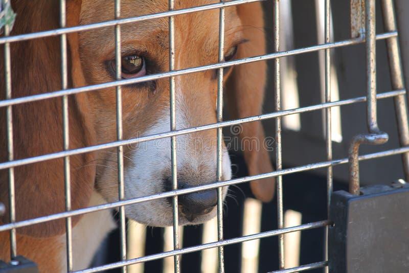 Проарретированная собака стоковые фото