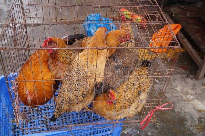 проарретированные цыплята стоковая фотография rf