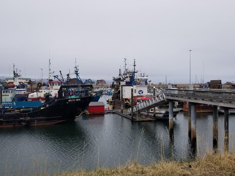 пробежка домой Аляски стоковые изображения rf