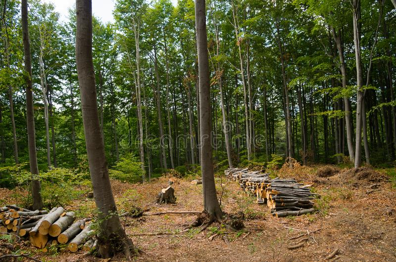 Проблема окружающей среды обезлесения стоковая фотография rf
