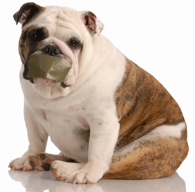 проблемы собаки лаять стоковая фотография rf