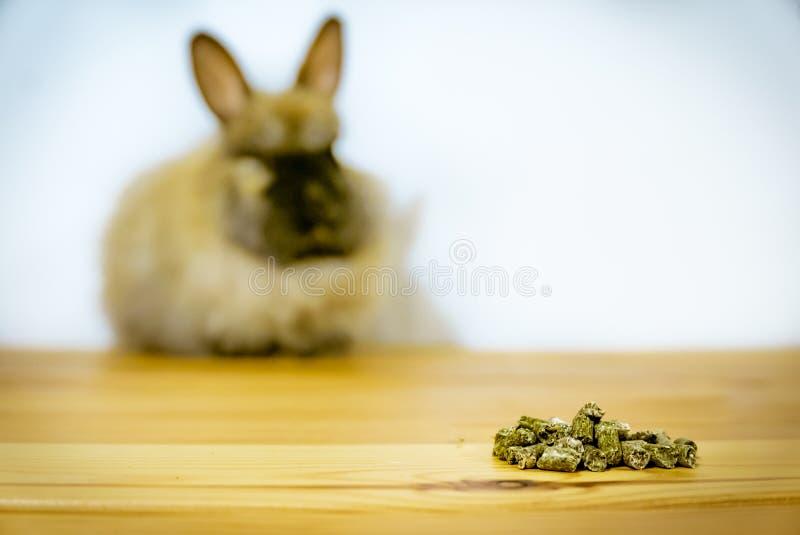 Пробовать отнести дружески вспугнутому набору зайчика кролика angora стоковые фотографии rf