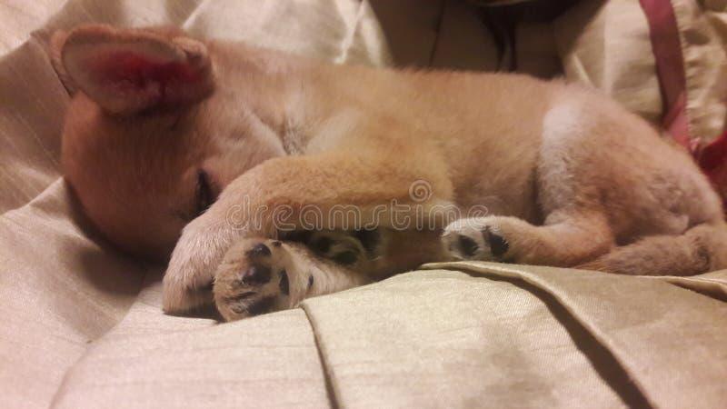 Пробовать спать стоковые фотографии rf