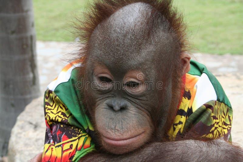 пробуренная обезьяна стоковая фотография