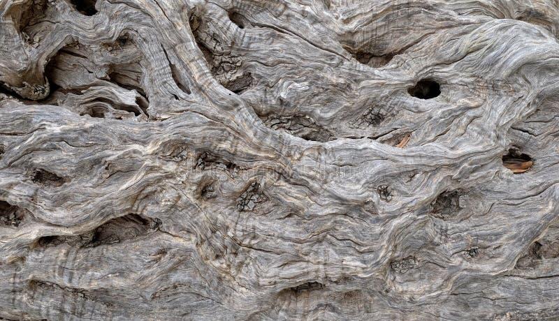 Прованская предпосылка, Черногория стоковое фото rf